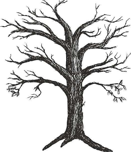 illustrierte herbst baum ohne blätter - winterruhe stock-grafiken, -clipart, -cartoons und -symbole