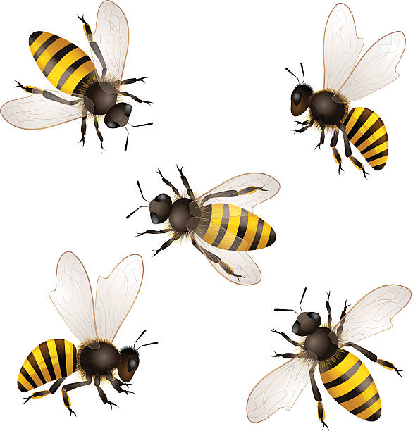 Illustrated set of honey bees on white background vector art illustration