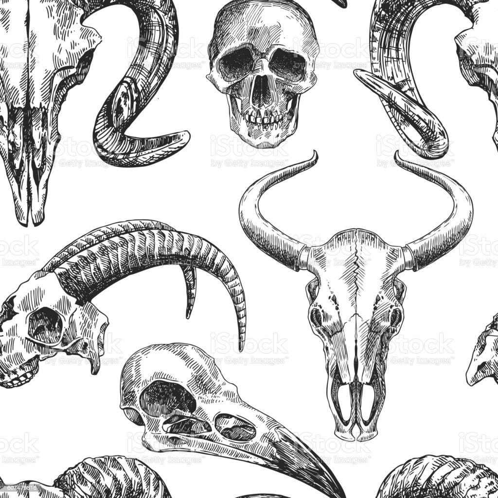 Illustration Animal Skull Stock Vector Art & More Images of Anatomy ...
