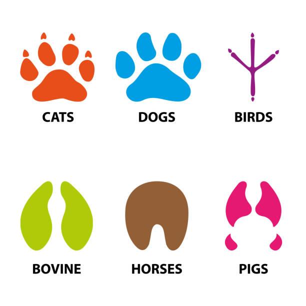 イラスト アイコン、シンボル動物の足、犬、鳥、馬、牛、豚、猫。ビジュアル ・ コミュニケーション、獣医の情報機関の材料に最適 - ペットショップ点のイラスト素材/クリップアート素材/マンガ素材/アイコン素材