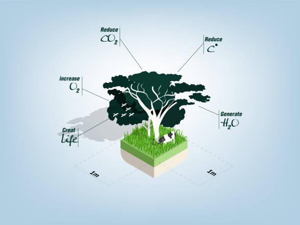 bildbanksillustrationer, clip art samt tecknat material och ikoner med illustration info grafisk design koncept av fördelarna med träd i kvadratmeter område - data visualization co2