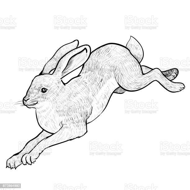 Illustration jumping hare hand drawn vector vector id872864992?b=1&k=6&m=872864992&s=612x612&h=sgekatgfgkh28fcxvtemdwg0rvx14lmbae   lgizdq=