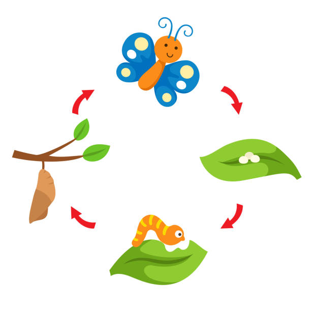 stockillustraties, clipart, cartoons en iconen met illustratie levenscyclus vlinder - larve