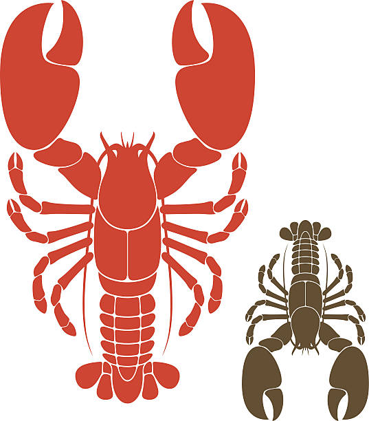 Illustration of 2 lobsters, one red & one black on white vector art illustration