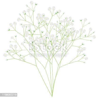 Illustration of a bunch of gypsophila