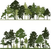 Illustration of a conifer tree in forest