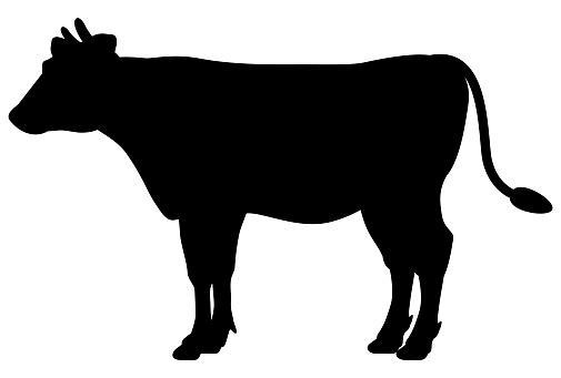 A simple cow silhouette drawn in black on a white background
