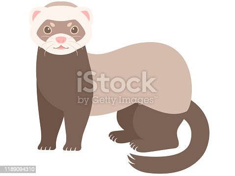 Illustration of a cute ferret.