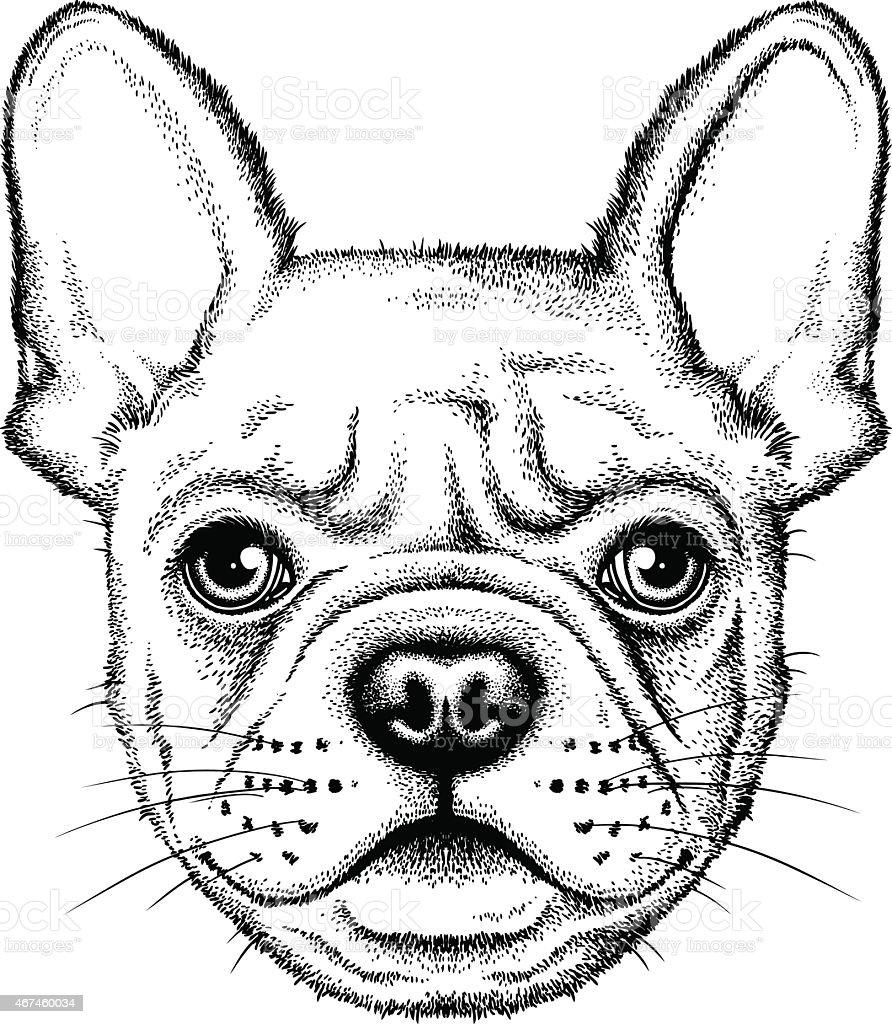 Illustration of a cute French bulldog vector art illustration