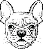 Illustration of a cute French bulldog