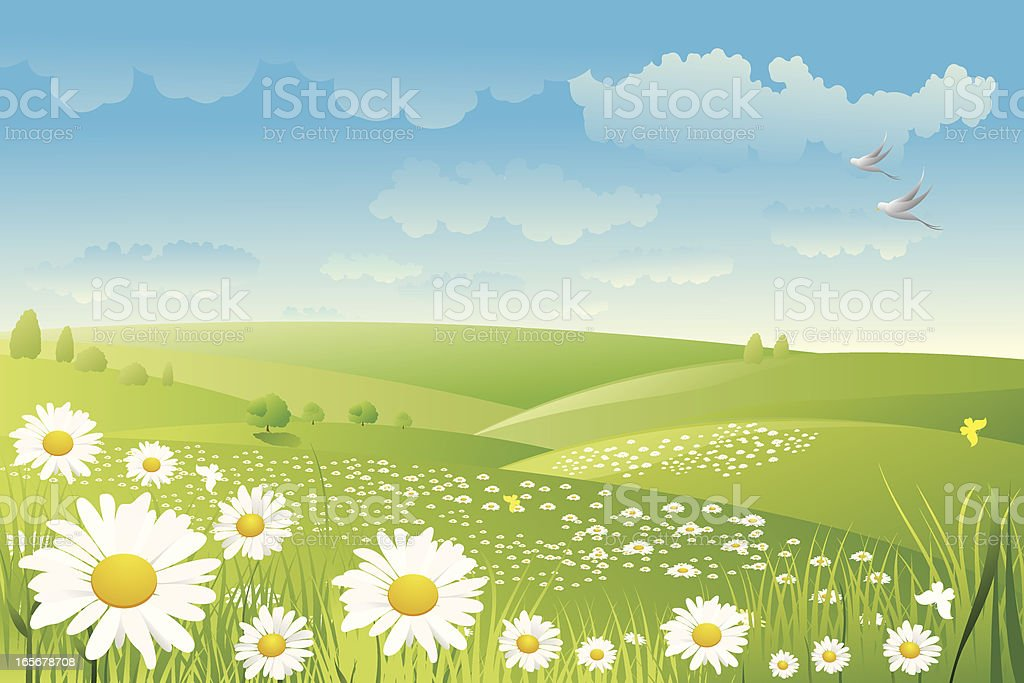 Illustration of a daisy flower field royalty-free stock vector art