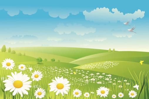 Illustration of a daisy flower field