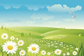 Illustration of Beautiful daisy flower background, all elements is individual objects. No transparencies, contains AI and jpeg, user can edit easily, all layers are separate, Please view my profile.
