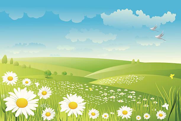 stockillustraties, clipart, cartoons en iconen met illustration of a daisy flower field - fresh start yellow