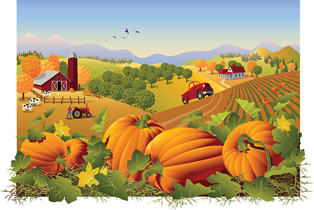 Illustration of a farm and field in autumn with pumpkins Autumn rural landscape at harvest time with pumpkins patch in the foreground. Grouped and layered for easy editing. High resolution jpg included. harvesting stock illustrations