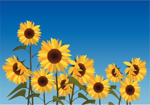 Illustration of a field of sunflowers against a blue sky