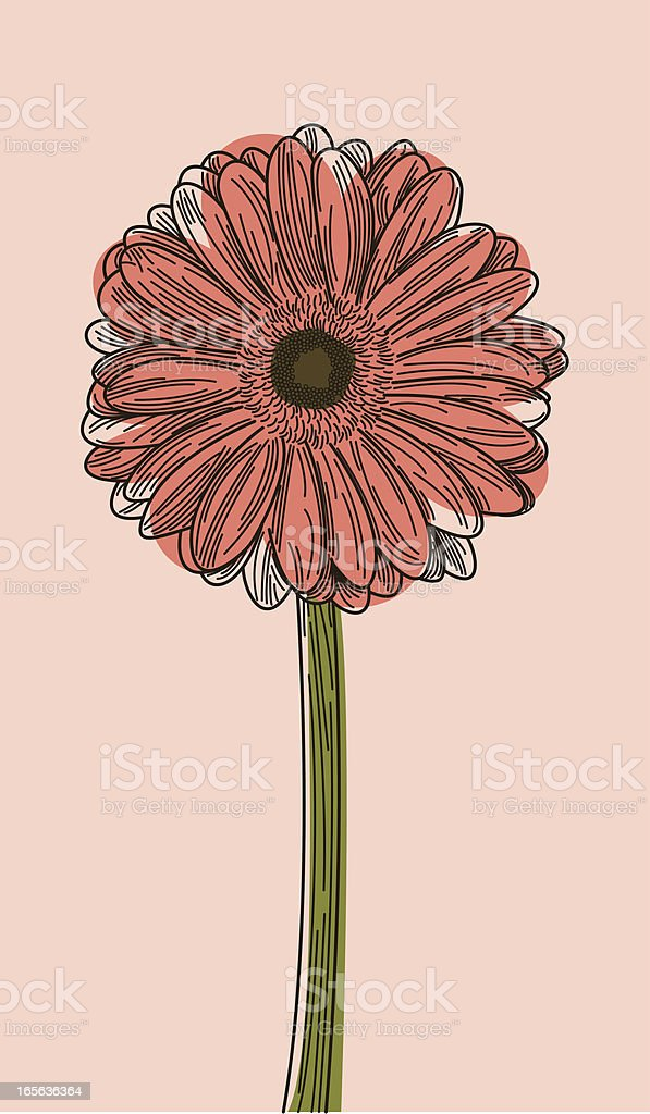Illustration of a Gerbera daisy on a light pink background  royalty-free stock vector art