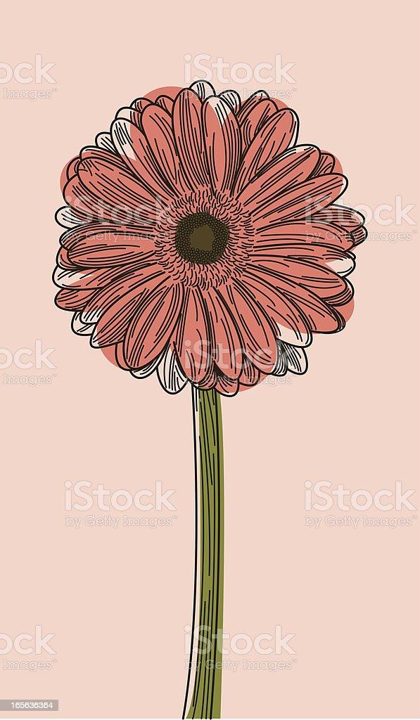Illustration of a Gerbera daisy on a light pink background  vector art illustration