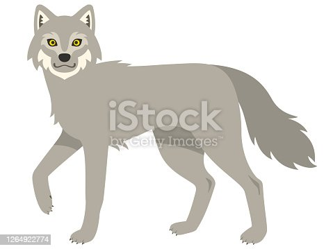 Illustration of a gray wolf