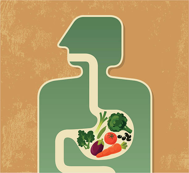Illustration of a human digesting fruits and vegetables Healthy eating symbol. Zip contains AI and PDF format. abdomen stock illustrations