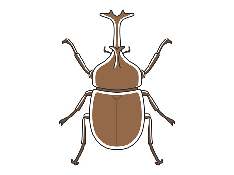 Illustration of a Japanese beetle.