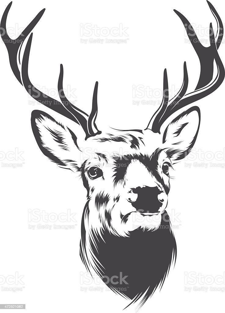 Illustration of a male deer head vector art illustration