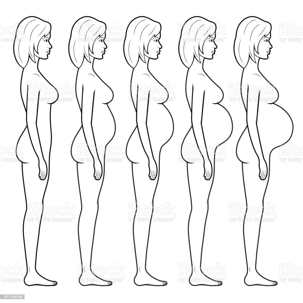 Ilustración De La Figura De Una Mujer Embarazada - Arte vectorial de ...