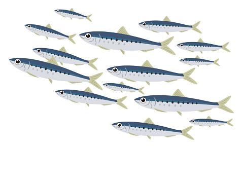 Illustration of a school of sardines