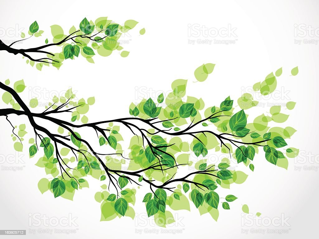 tree branch with leaves vector. illustration of a tree branch with green leaves vector art e
