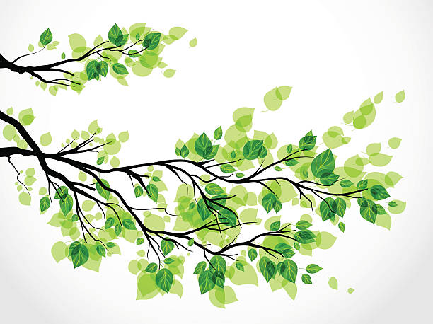 Illustration of a tree branch with green leaves vector art illustration