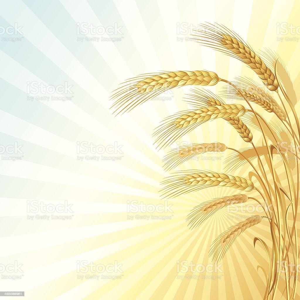 Illustration of a wheat field and sunburst royalty-free stock vector art