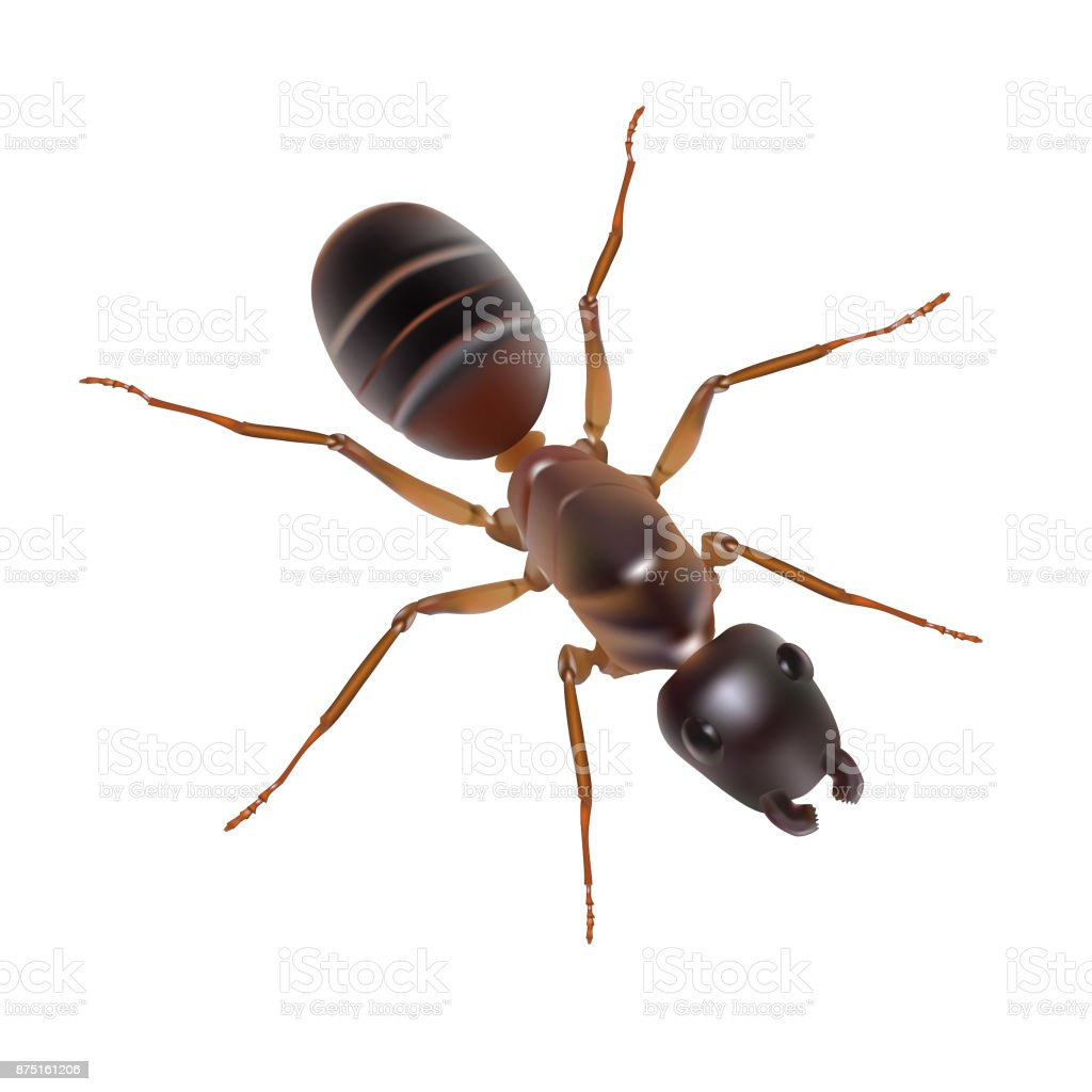 Illustration of an ant on a white background vector art illustration