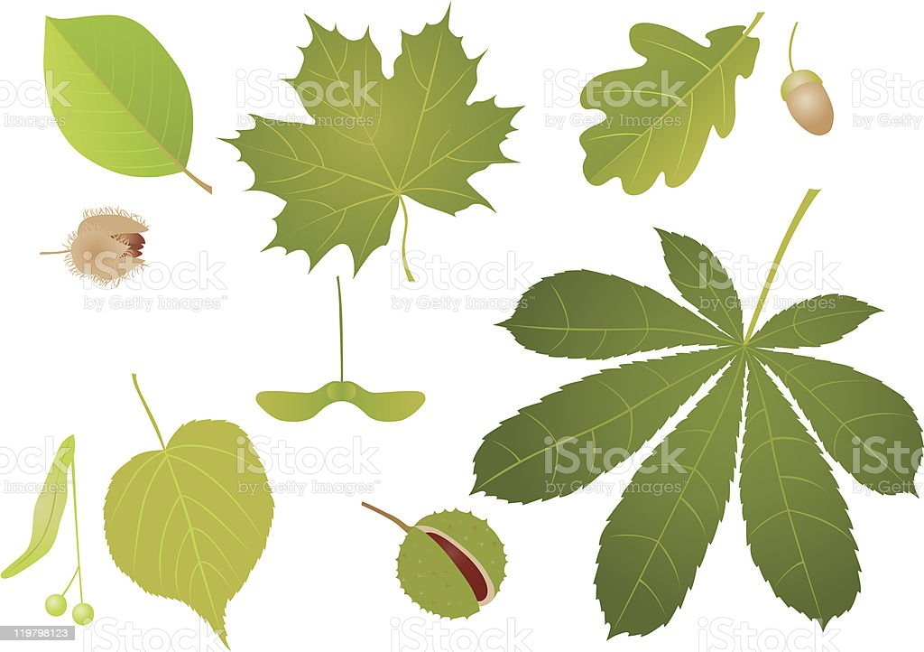 Illustration of an assortment of leaves and seeds vector art illustration