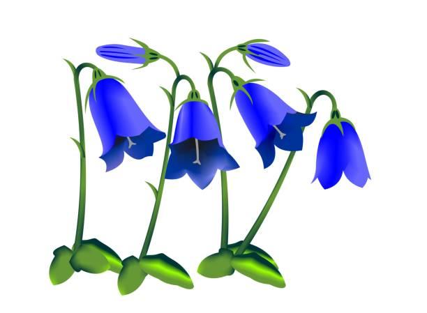 281 Bluebell Cartoon Illustrations & Clip Art - iStock