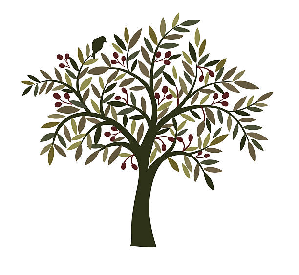 illustrations, cliparts, dessins animés et icônes de olive tree. - olivier