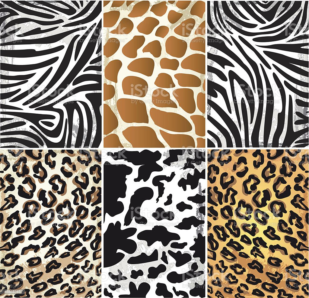 Illustration of Animal Skin Textures vector art illustration