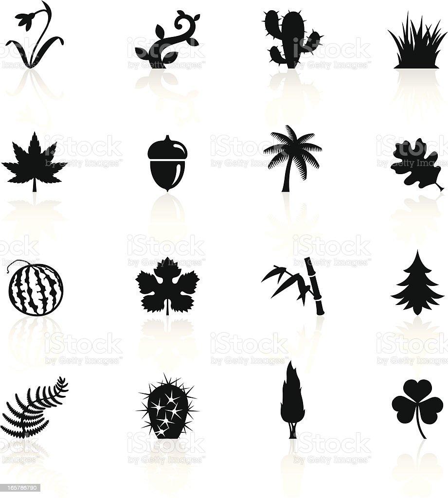 Illustration of black botanic symbols Illustration of different Botanic related objects and symbols. Acorn stock vector