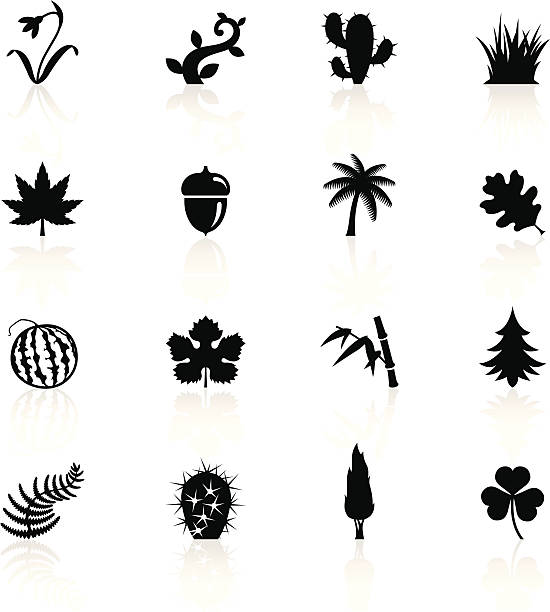 Illustration of black botanic symbols Illustration of different Botanic related objects and symbols. oak leaf stock illustrations