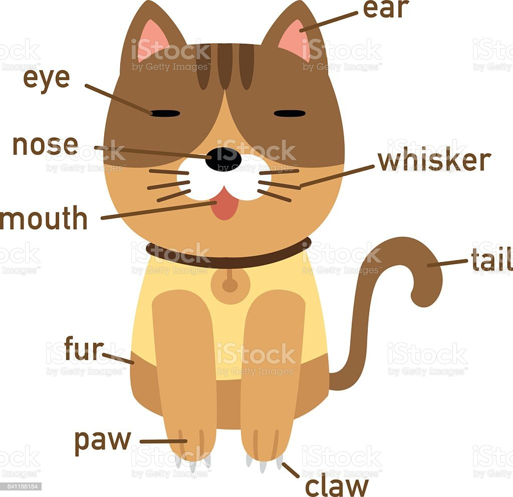Illustration Of Cat Vocabulary Part Of Body Stock Vector Art & More ...