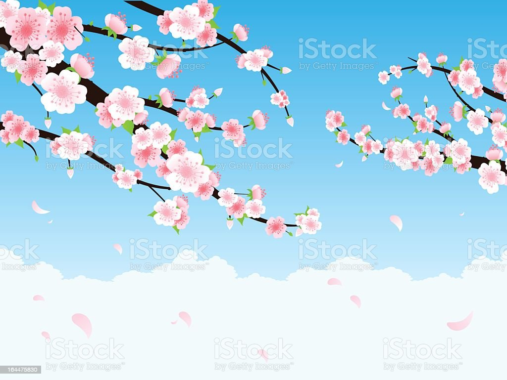 Illustration of cherry blossom branches royalty-free stock vector art