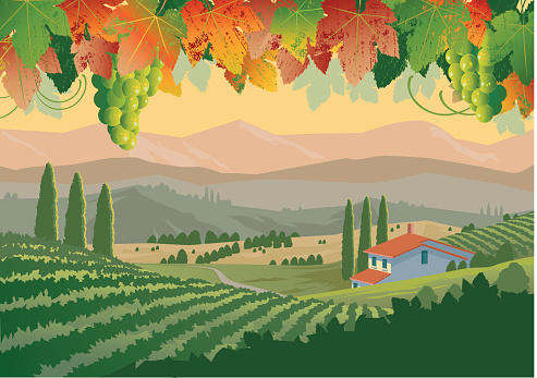 Illustration of colorful Tuscan vineyard landscape
