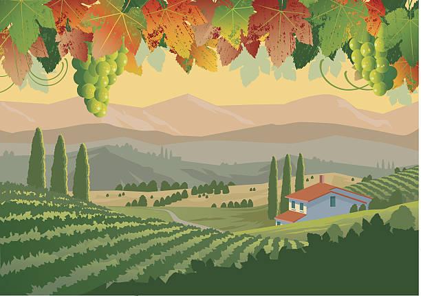 bildbanksillustrationer, clip art samt tecknat material och ikoner med illustration of colorful tuscan vineyard landscape - vineyard