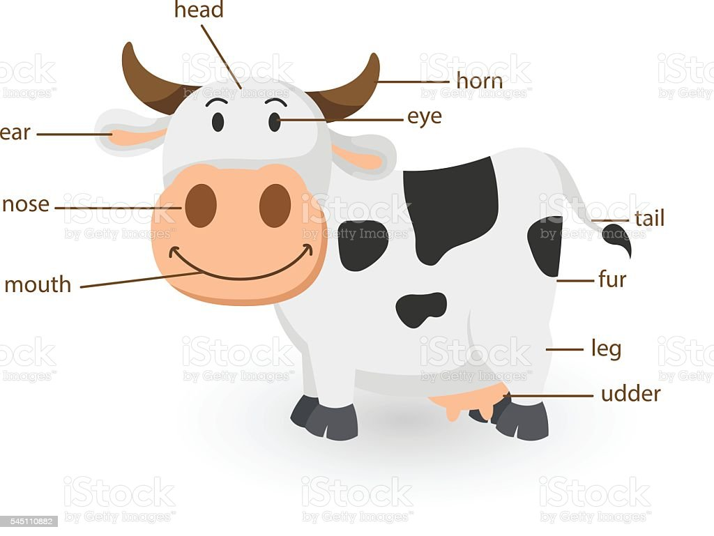 Illustration Of Cow Vocabulary Part Of Body Stock Vector Art & More ...