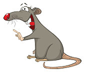 Big lovely gray rat with  long tail and  red nose