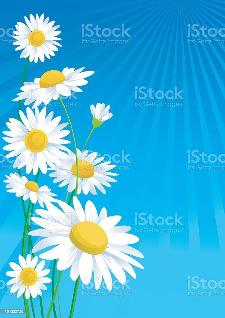 Illustration of daisies on a blue background vector art illustration