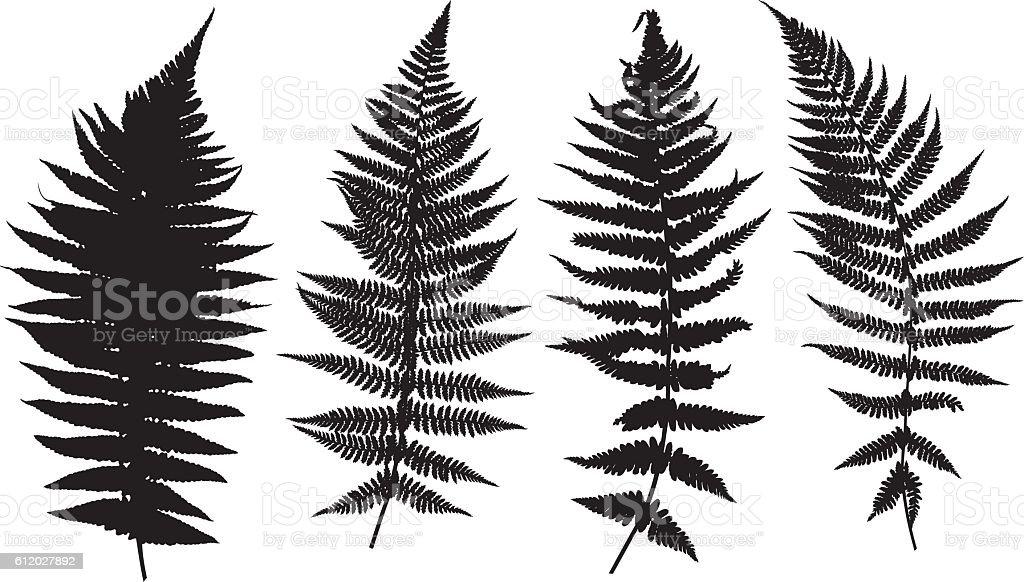 Illustration of different ferns