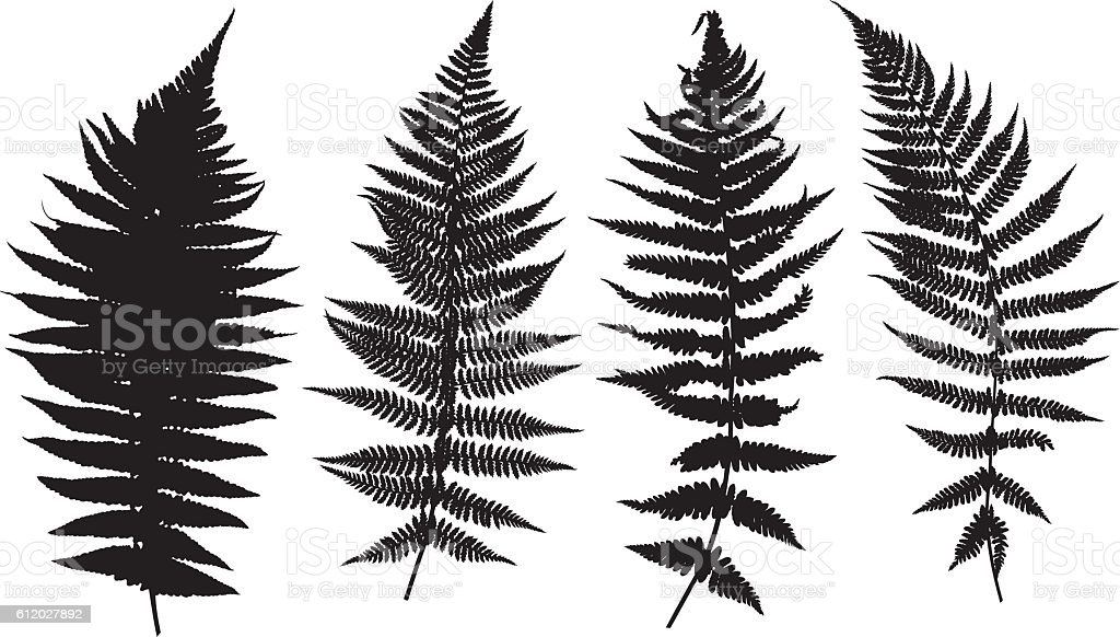 Illustration of different ferns vector art illustration