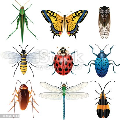 Vector illustration of insect set for your web page, interactive, presentation, print, and all sorts of design need.