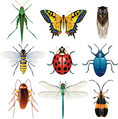 Illustration of different insects