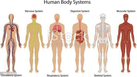 human body outline vector free ai svg and eps https vector me search human body outline